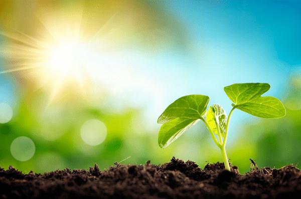 TexelEnergie voor de zesde keer(!) op rij groenste leverancier van Nederland